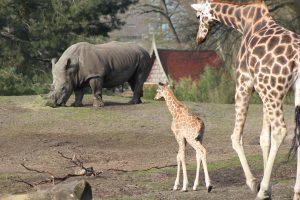 Dierenpark Emmen, Afrikasavanne